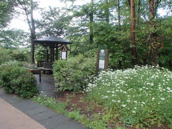 朝散歩コースの花たち_f0064906_12162036.jpg