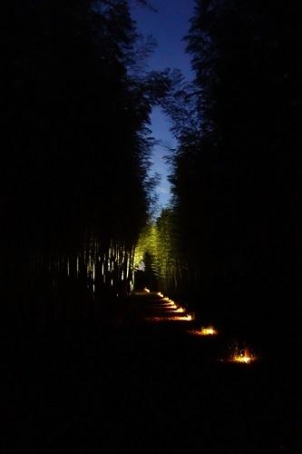 夜の竹林_c0303307_13390345.jpg