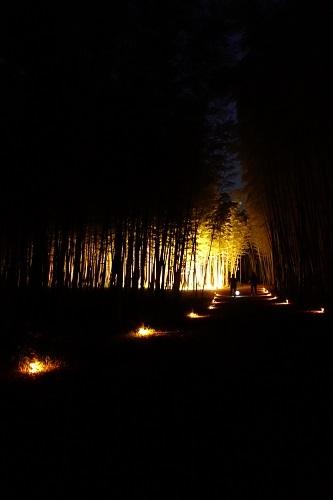 夜の竹林_c0303307_13391948.jpg