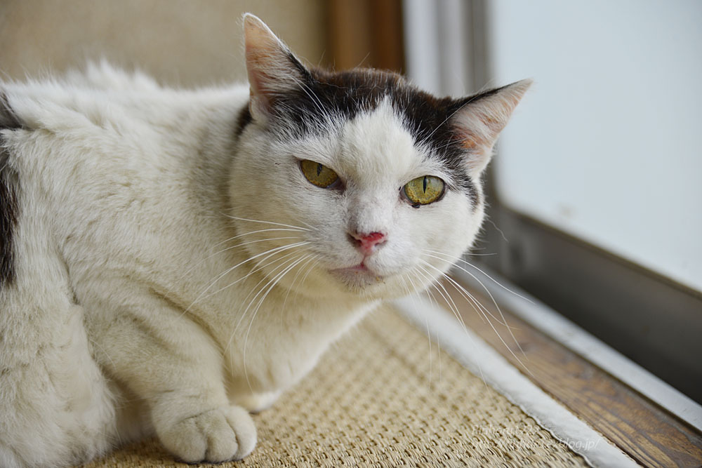 2018.6.8 愛猫「まお」のこと_f0250322_210118.jpg