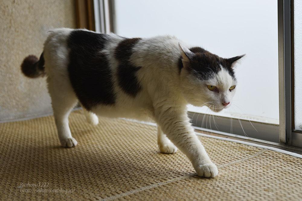 2018.6.8 愛猫「まお」のこと_f0250322_2101741.jpg