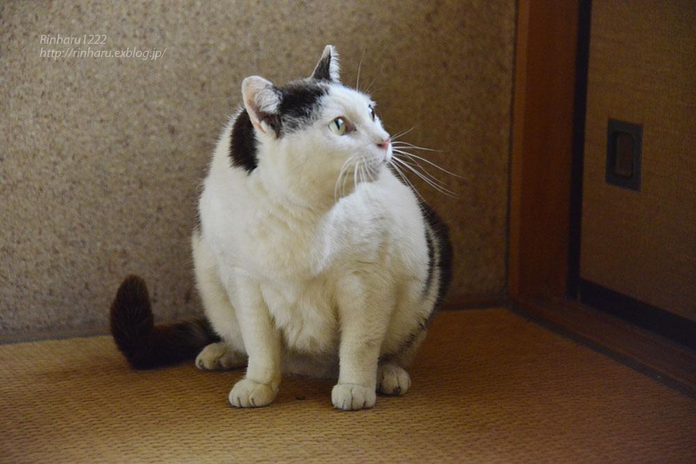 2018.6.8 愛猫「まお」のこと_f0250322_2104371.jpg