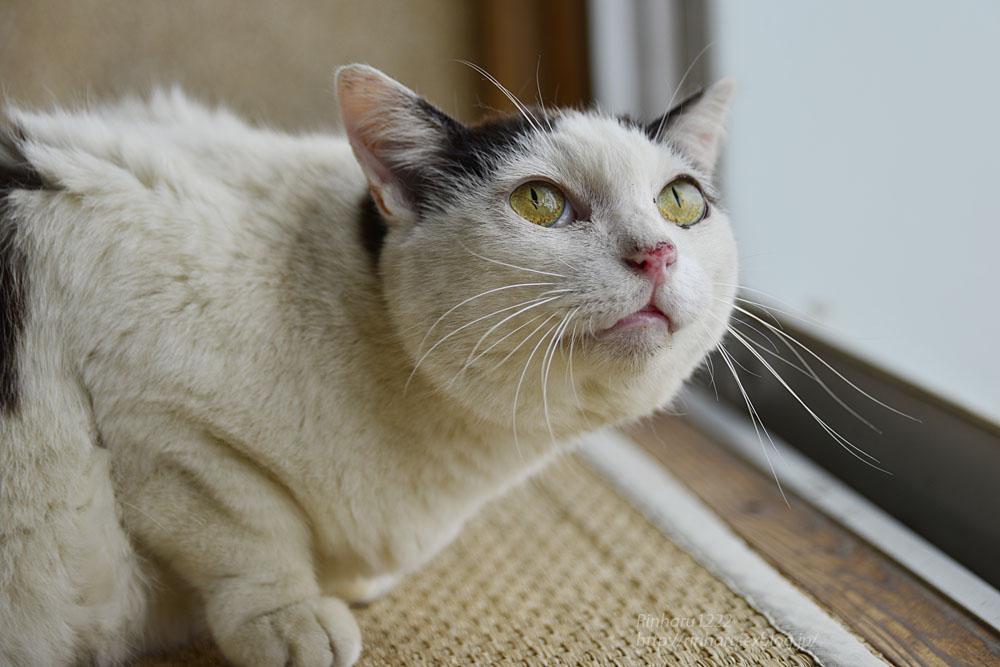 2019.6.8 愛猫「まお」のこと_f0250322_210951.jpg