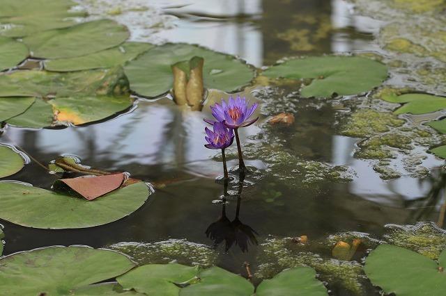 松阪ベルファーム庭園を散策(その5)最終回(撮影:6月1日)_e0321325_14172555.jpg