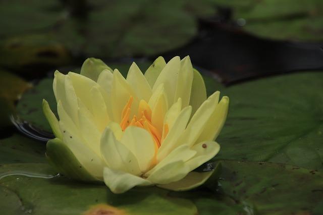 松阪ベルファーム庭園を散策(その5)最終回(撮影:6月1日)_e0321325_14183529.jpg