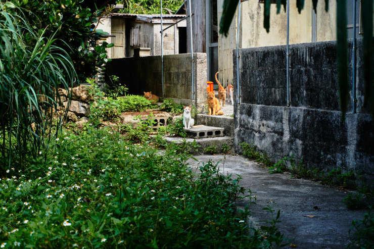 朝の散歩(4cut) 大神島_e0342136_20084859.jpg