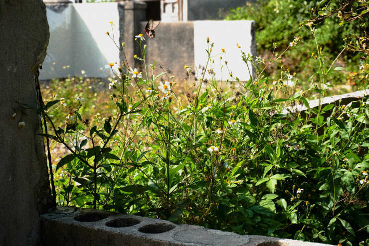 朝の散歩(4cut) 大神島_e0342136_20085968.jpg
