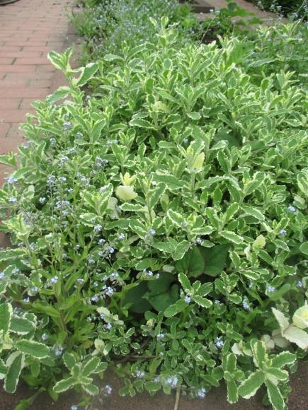 お庭のお花を飾れる!いい季節~~(^^♪_a0279743_22321118.jpg