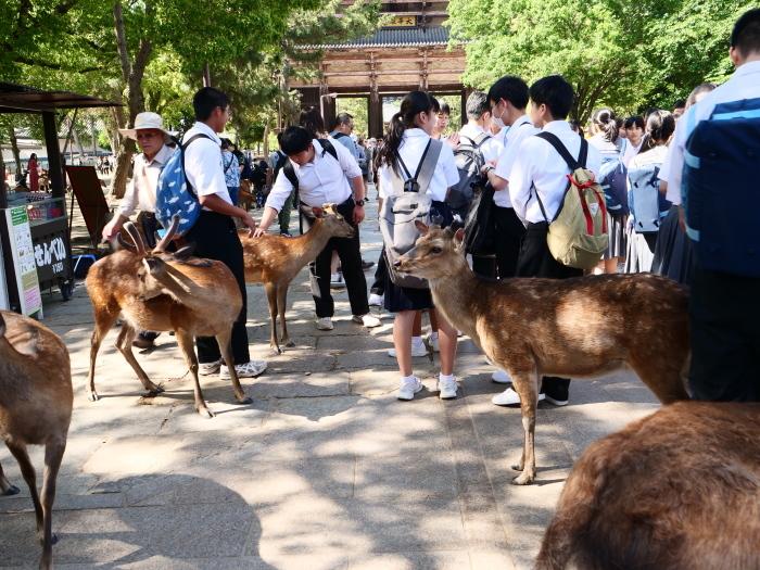 天然記念物 奈良の鹿  2019-06-11 00:00   _b0093754_20010197.jpg
