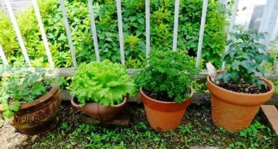 アーチェリーと家庭菜園、その後♪_b0194861_16181705.jpg