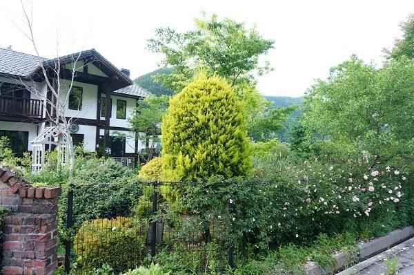 また、夕方のお庭_e0365880_22155149.jpg