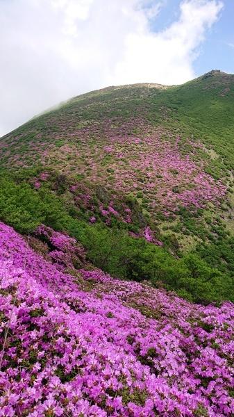 くじゅう~三俣山=ミヤマキリシマ登山_e0262382_07102449.jpg
