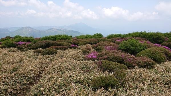 くじゅう~三俣山=ミヤマキリシマ登山_e0262382_07132642.jpg