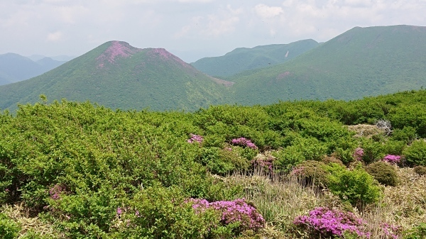 くじゅう~三俣山=ミヤマキリシマ登山_e0262382_07134761.jpg
