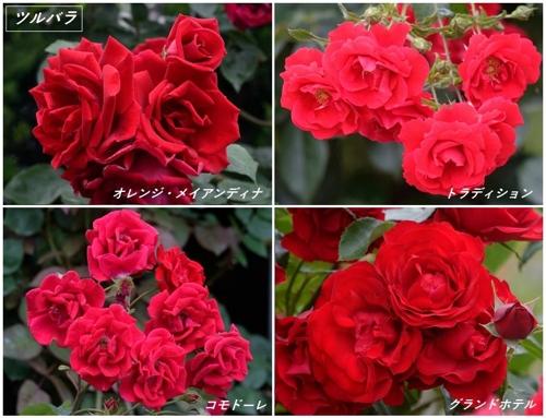 地元公園の春バラたち_a0204089_4573784.jpg