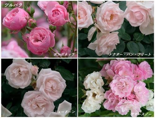 地元公園の春バラたち_a0204089_4574718.jpg