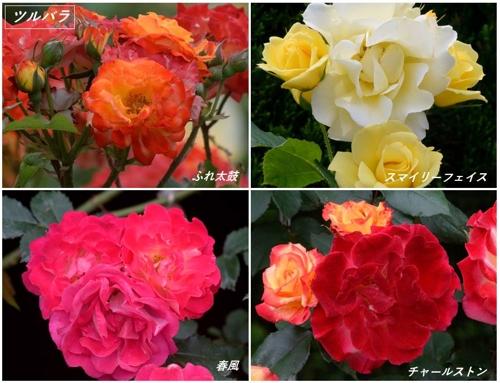 地元公園の春バラたち_a0204089_4575537.jpg