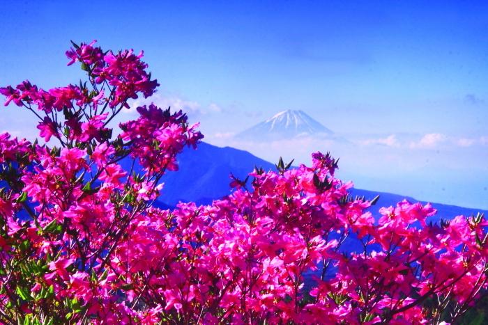 令和元年5月の富士(38)美し森のツツジと富士_e0344396_16332117.jpg