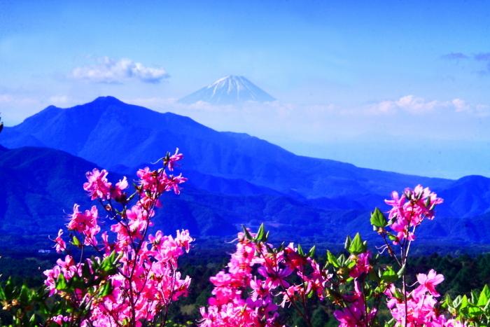 令和元年5月の富士(38)美し森のツツジと富士_e0344396_16332807.jpg