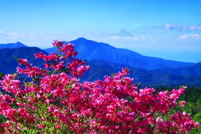 令和元年5月の富士(38)美し森のツツジと富士_e0344396_16334413.jpg