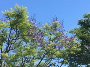 Dignity 尊厳〜ジャカランダの花と共に_e0115301_13494502.jpg
