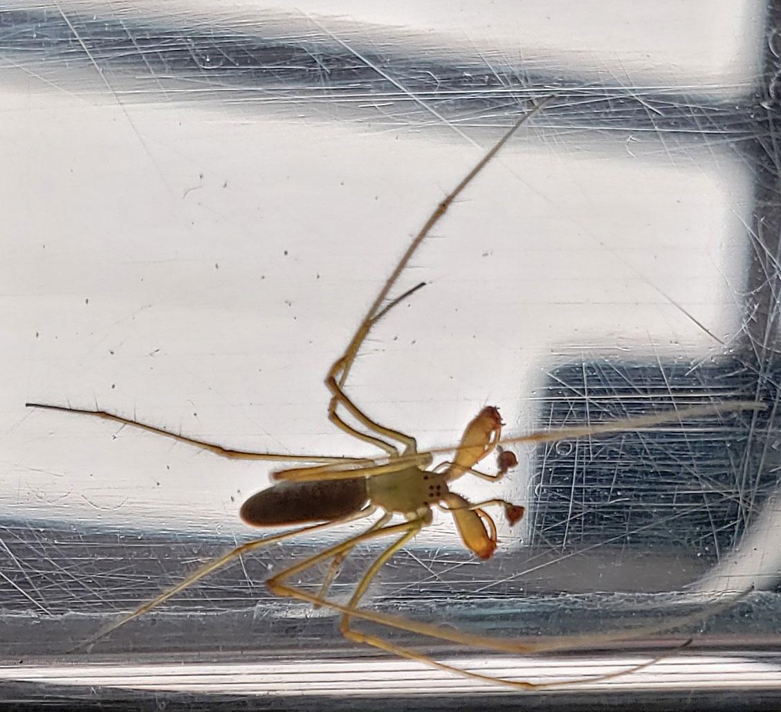車庫に見たことの無い蜘蛛が‥_b0025008_145382.jpg