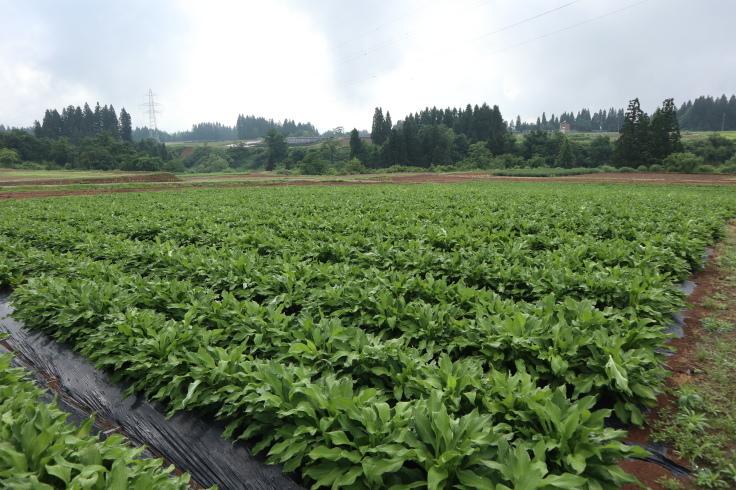 6月になった 畑の様子_f0067514_10185954.jpg