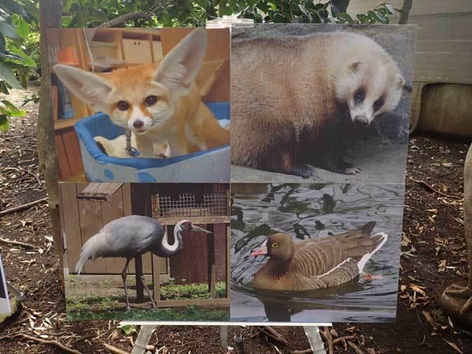 井の頭自然文化園 動物慰霊祭( September 2018)_b0355317_11492141.jpg