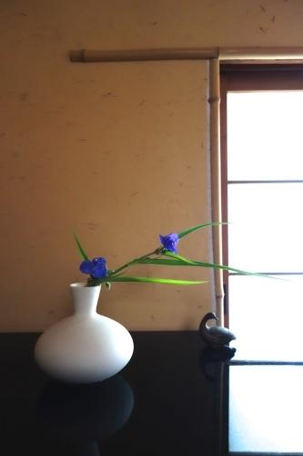 初夏の花_a0197730_14581527.jpg