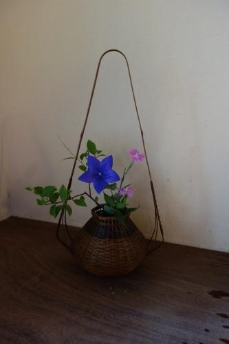 初夏の花_a0197730_14591907.jpg