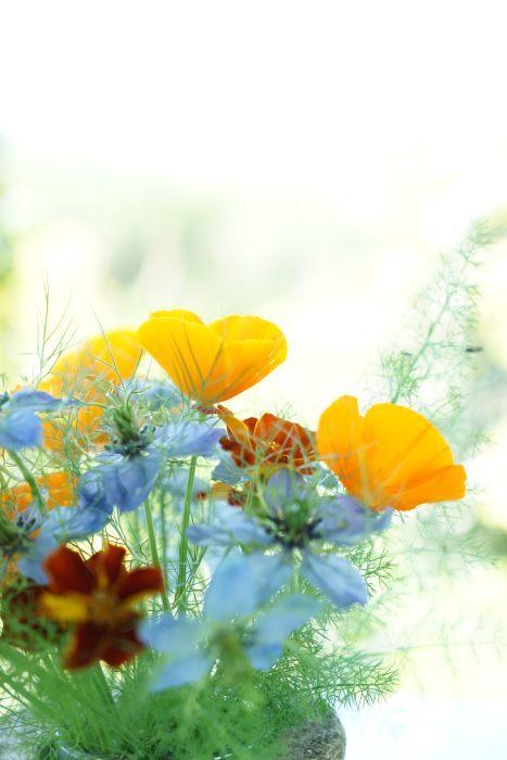 野の花_f0310138_06551598.jpg
