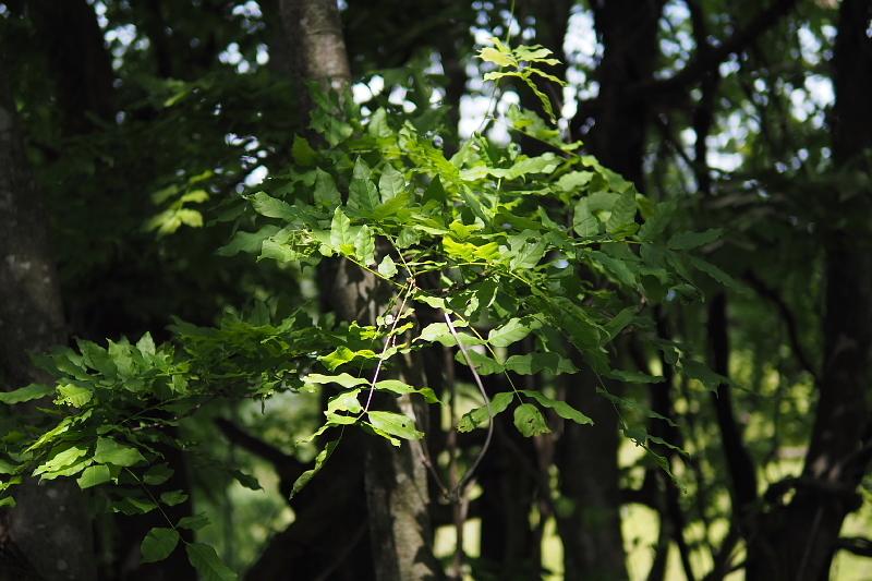 【キャンプ場レポート】グリーンパークふきわれ ③ ~天の川と新緑編_b0008655_12324446.jpg