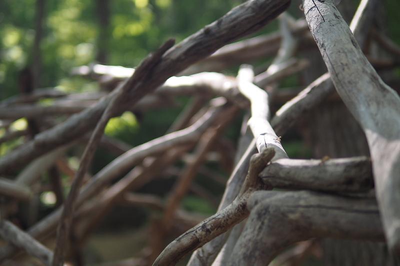 【キャンプ場レポート】グリーンパークふきわれ ③ ~天の川と新緑編_b0008655_12333439.jpg