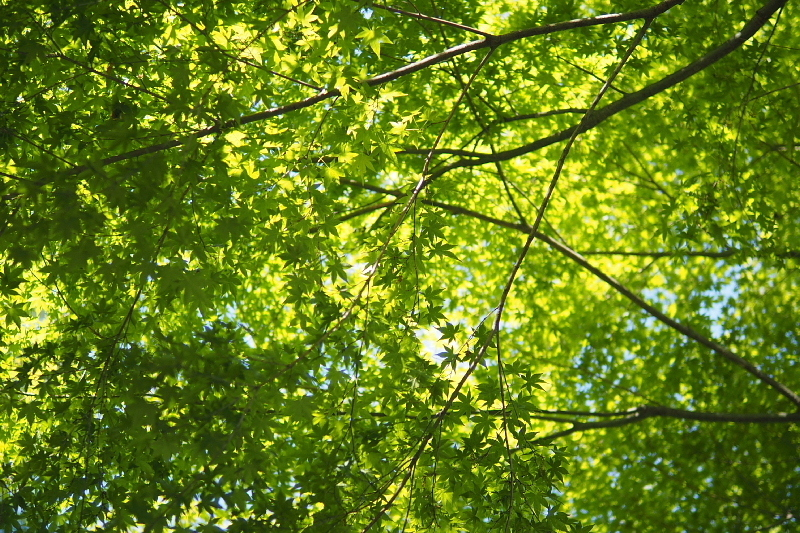 【キャンプ場レポート】グリーンパークふきわれ ③ ~天の川と新緑編_b0008655_12342288.jpg