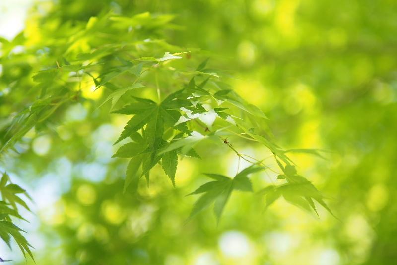 【キャンプ場レポート】グリーンパークふきわれ ③ ~天の川と新緑編_b0008655_12343411.jpg
