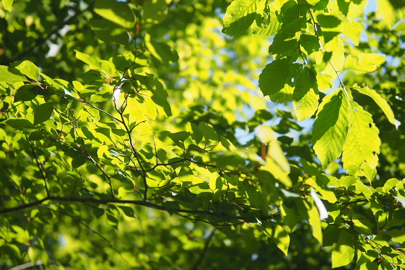 【キャンプ場レポート】グリーンパークふきわれ ③ ~天の川と新緑編_b0008655_12344719.jpg