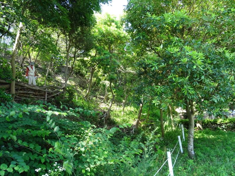 土砂崩れ復旧工事跡の斜面に土留を作る・・・うみべの森_c0108460_22480000.jpg