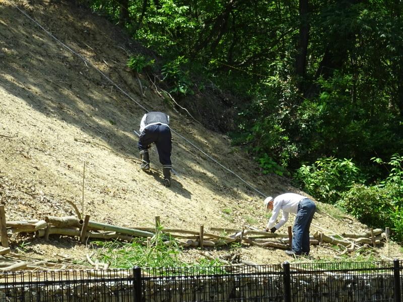 土砂崩れ復旧工事跡の斜面に土留を作る・・・うみべの森_c0108460_22552342.jpg