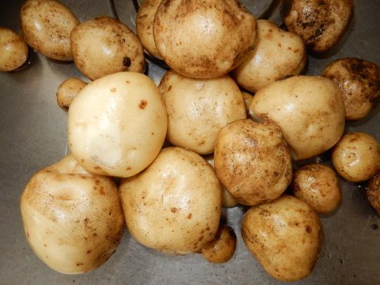 '19,6,9(日)お蕎麦とズッキーニとサツマイモ植え!_f0060461_11453213.jpg