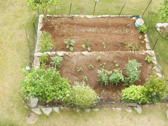 '19,6,9(日)お蕎麦とズッキーニとサツマイモ植え!_f0060461_11473349.jpg