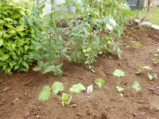 '19,6,9(日)お蕎麦とズッキーニとサツマイモ植え!_f0060461_11481900.jpg