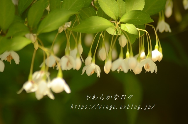 6月の花_a0158478_08530556.jpg