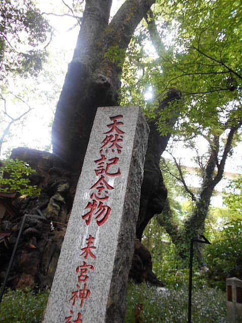 来宮神社_e0290193_20572748.jpg
