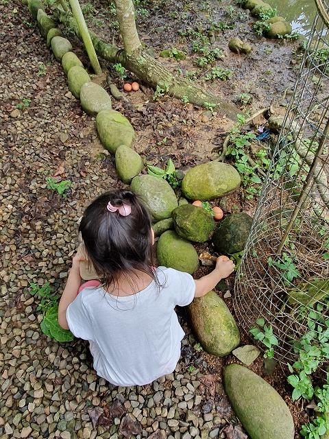 【苗栗へ行こう】⑦新鮮な玉子収穫体験と蛋捲(エッグロール)作り体験_b0182708_15571655.jpg