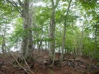 花崗岩の沢から癒しのブナ林、そして棚田跡…殿又谷_c0359615_22020745.jpg