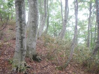 花崗岩の沢から癒しのブナ林、そして棚田跡…殿又谷_c0359615_22021805.jpg