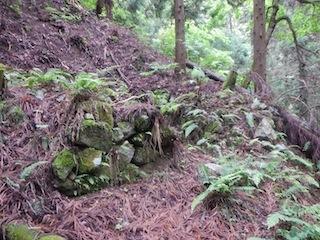 花崗岩の沢から癒しのブナ林、そして棚田跡…殿又谷_c0359615_22031125.jpg