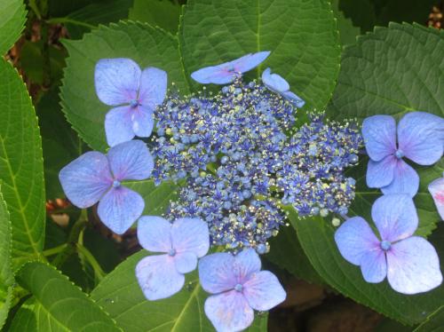 ■紫陽花の季節の母校同窓会──週替わりの夕暮れ[6/8-10]_d0190217_18112227.jpg