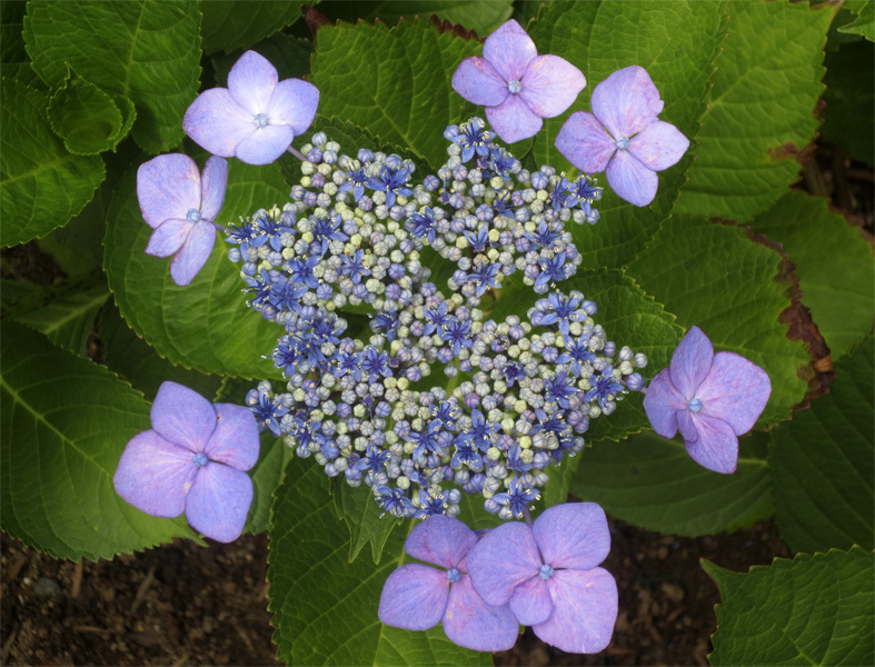 ■紫陽花の季節の母校同窓会──週替わりの夕暮れ[6/8-10]_d0190217_18462702.jpg