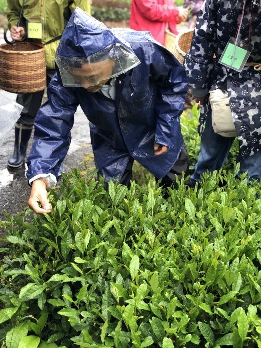 サロンドシャンティ大人の遠足 梅が島へ 茶摘みツアー_a0169924_21511271.jpeg